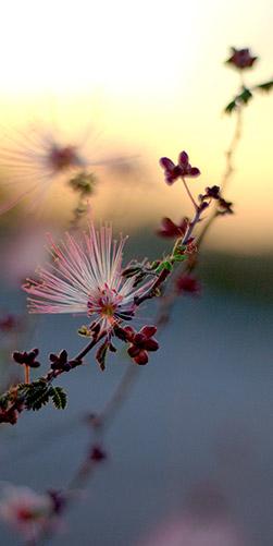 Desert Flower Mission and Values